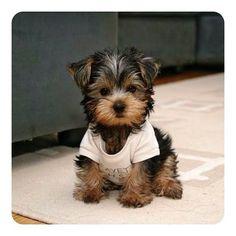 Cute puppy!!!