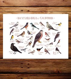 Northwest State Backyard Birds Art Print by Kate Dolamore Art on Scoutmob