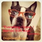 Everything I know, I learned from dogs.