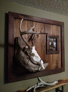 Custom European mount plaque with picture frame Deer Hunting Decor, Deer Head Decor, Hunting Rooms, Deer Mount Decor, Antler Mount, Taxidermy Decor, Taxidermy Display, The Skulls, Deer Skull Art