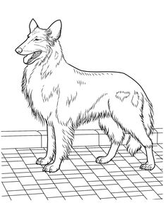 Dog Coloring Pages 22 Teenagers