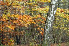 Waldrand im Herbst