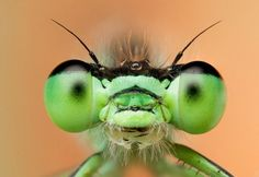 macro-insects-green.jpg