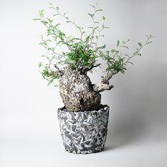 TOKYはデザイン性の高いオリジナル鉢・セレクト鉢の販売をするお店です。多肉植物・サボテンをそれぞれの個性に合わせた鉢に仕立てたものの提案もしています。