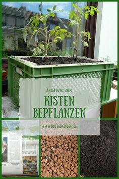 Kisten bepflanzen mit Gemüse, Kräuter und Blumen für den Balkon
