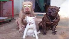Funny Animal Videos, Funny Animals, Cute Animals, Best Cat Gifs, More Cute, Cat Life, Cool Cats, Funny Cats, French Bulldog