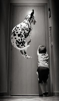 Jumping Dalmatian