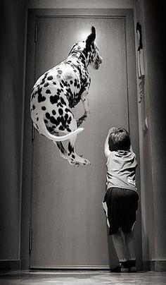 Jumping Dalmatian; 大麥町