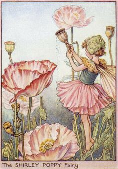 The Shirley Poppy Fairy. Vintage flower fairy art by Cicely Mary Barker. Taken from 'Flower Fairies of the Garden'. Click through to the link to see the accompanying poem. Cicely Mary Barker, Elfen Fantasy, Fantasy Art, Flower Fairies, Flowers Garden, Fairies Garden, Fairy Pictures, Vintage Fairies, Fantasy Illustration