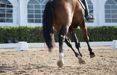 Tips for Teaching Yourself New Riding Skills Farm Animals Pictures, Horse Pictures, Classic Equine, Horse Training Tips, Dressage Horses, Spring Training, Horse Barns, Horse Photography, Horse Stuff
