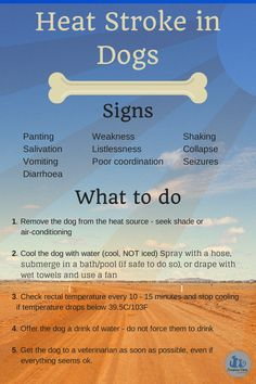 Heat stroke in dogs Veterinarian Assistant, Veterinarian Technician, Heat Stroke In Dogs, Airline Pet Carrier, Oils For Dogs, Dog Wash, Dogs And Kids, Dog Signs, Pet Carriers