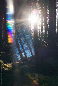 A teenage boy walks through a forest at sunset, the image is taken through a glass prism which catches the light causing a rainbow flare.