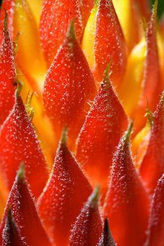 Orange Flowering Bromeliad by Deb Jones1