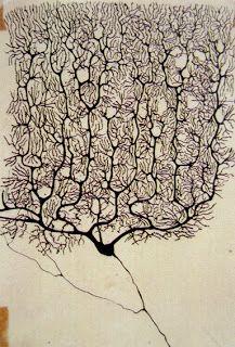 Neurona - Santiago Ramón y Cajal