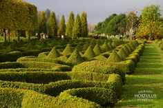 Buxus, Vineyard, Outdoor, Outdoors, Vine Yard, Vineyard Vines, Outdoor Games, The Great Outdoors