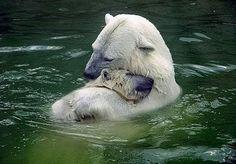aww. cuties in nature :)