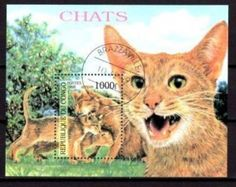 Katzen-Katzenfamilie-Katzenkinder-Hauskatzen-Abessiner-Kongo-Block-139