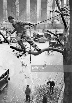 A Roped Employee Trimming A Tree 10 Meters Above The Ground, Near La Madeleine In Paris Around 1930. (Photo by Keystone-France/Gamma-Keystone via Getty Images)