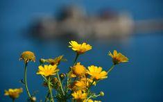 Πρωτομαγιά: Τα έθιμα, το μαγιάτικο στεφάνι και τα αρχέγονα λατρευτικά στοιχεία | Ελλάδα | Η ΚΑΘΗΜΕΡΙΝΗ Greece, Plants, Spring, Google, Greece Country, Plant, Planting, Planets