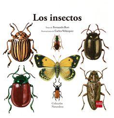 De 4 a 6 años. n este libro con magníficas ilustraciones realistas, descubrirás la familia de los insectos: su origen, qué partes tiene su cuerpo, qué son la muda y la metamorfosis, cómo se reproducen, cuáles son sus sentidos...