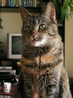 Moppie een van mijn vorige katten.