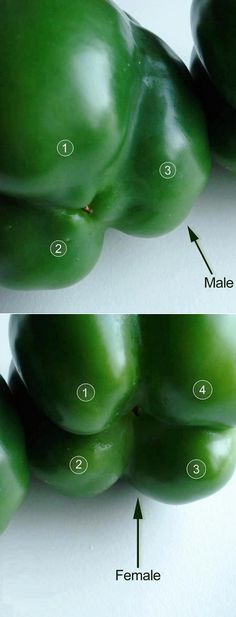 Male or female bell peppers? The ones with four bumps are female. The ones with three bumps are male. The female peppers are full of seeds. You can save yourself some money by getting the males. Who knew?