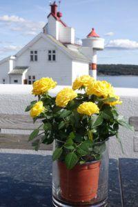 - om gode saker og opplevelser Santa Lucia, Table Decorations, Plants, Home Decor, Homemade Home Decor, Flora, Plant, Decoration Home, Saint Lucia