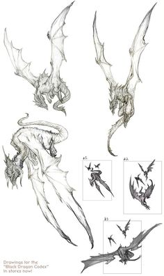 "Drawings for the ""Black Dragon Codex"" Fantasy Creatures, Mythical Creatures, Dragon Anatomy, Dragon Artwork, Dragon Drawings, Dragon Sketch, Monster Design, Creature Concept, Creature Design"