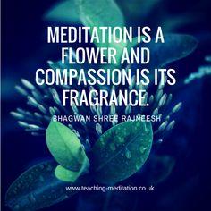 Meditation = compassion that can bloom Bhagwan Shree Rajneesh British Schools, Meditation Quotes, Compassion, How To Become, Bloom, Teacher, Ideas, Quotes On Meditation, Professor