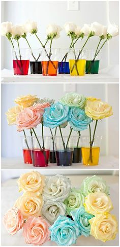 How to dye rainbow flowers. Fun experiment for kids!
