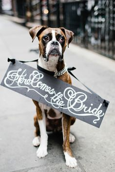"Adorable pup ""Here comes the Bride"" #sign Photography: Leila Brewster - leilabrewsterphotography.com  Read More: http://www.stylemepretty.com/2014/05/24/nyc-financial-district-engagement/"