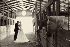 i think its pretty amazing that all the horses are looking at the couple!