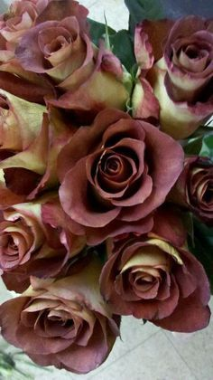 Real Brown Roses Brown roses does not mean dead