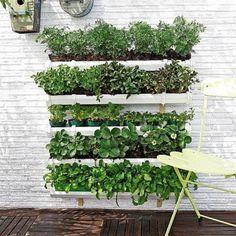 Cómo hacer un jardín vertical | La Bioguía
