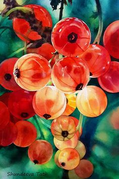 Red currant by Takir on DeviantArt Watercolor Fruit, Watercolor And Ink, Watercolour Painting, Watercolor Flowers, Painting & Drawing, Watercolors, Botanical Illustration, Botanical Art, Photo Fruit