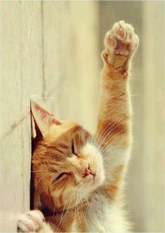 I surrender, to naps!