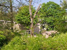 Zoo Basel Basel, Activities, Plants, Kids, Animales, Zoology, Switzerland, Animals, Young Children