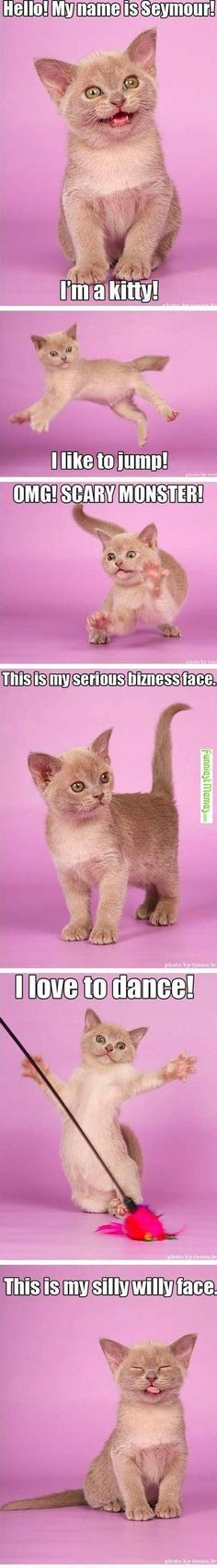 This is Seymour the kitten, and he loves to play, jump and nap! Such a silly kitty! funny - cat - memes