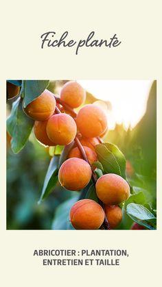 Permaculture, Plantation, Plum, Food, Gardens, Apricot Tree, Veggie Gardens, Bricolage, Recipes