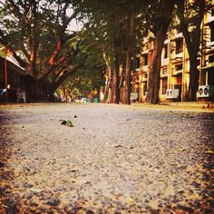 lonely path #click #iphone5s #loyola #chennai