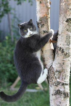Curiosity got me up here, now how do I get down?