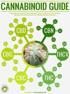 CBDs Guide