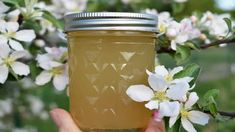 How to Make Homemade Extracts - Vanilla, Lemon and Almond Earache Remedies, Herbal Remedies, Rhubarb Pudding Cake, Potato Towers, Recipes With Mozzarella Cheese, Homemade Ketchup Recipes, Growing Blueberries, Beef Tongue, Can Green Beans