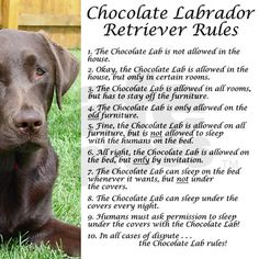 Chocolate Lab Rules Framed Tile on CafePress.com
