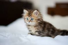 Image result for cats and kittens