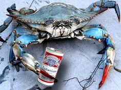 Image result for maryland blue crab