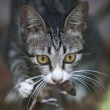 5 Ways Feral Cats Do More Good Than Harm for Wildlife