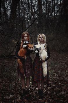 foxes by shi nya nya