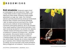 Strzeczyk drobnołuski_National Geographic