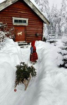 Pulling up the Christmas tree in a Winter Wonderland Christmas Scenes, Noel Christmas, Country Christmas, All Things Christmas, Winter Christmas, Cabin Christmas, Norway Christmas, Thanksgiving Holiday, Simple Christmas